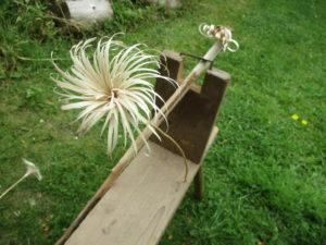 spiral gypsy flower